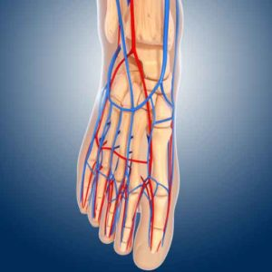 Veins and arteries of the foot can be impacted by peripheral vascular disease